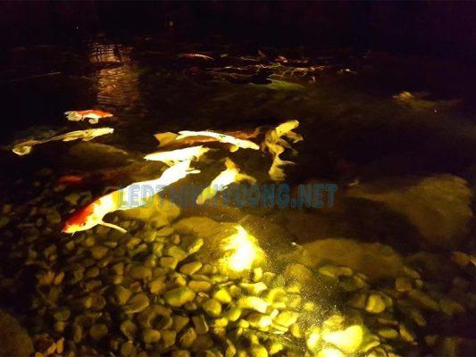 Hướng dẫn lựa chọn đèn Led âm nước hồ cá 5